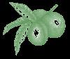 onbekend fruit groen